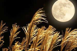 1134夜:中秋の名月に月見団子を買ってきました。