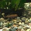 秋色めいた熱帯魚
