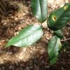 南山を登ってみよう その3 いい香りの植物