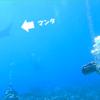 ダイバーの憧れ!「マンタ」その不思議な生態とは!?