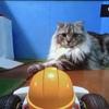 マリオカート×猫 手作りコースで大パニック!?