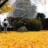 熊本城の黄色いじゅうたん