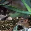 【成功例】 窮鼠猫を噛む