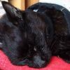 扁平上皮癌になった愛猫を、天にお返しした⑪