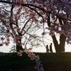 春は「出会い」の季節!?