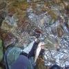 渓流釣り2019 4回目 久しぶりの尺イワナをゲット