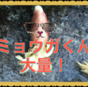 自家栽培のミョウガが大量!!