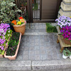 いよいよ・・・春! 〜わが家の花たち〜