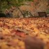 ノスタルジックな雰囲気の写真に仕上げるコツ!少し味のある写真の撮り方!7