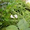 五月の庭の白い花と洗濯物
