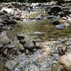 森戸川源流 うっそうとした森 透き通った水