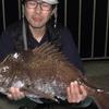 岸からのマダイ釣り 東京湾(神奈川県方面)で生態系が激変している可能性