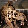 「ヨコハマ恐竜展2017」に行ってきました【後編】迫力の化石/動く恐竜がいる!