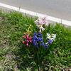 春の散歩 その2