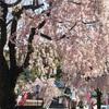 【春休み真っ最中】