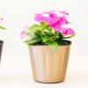 高級感のある花や苗を演出!「TOプレミアムポット」