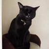 今日の黒猫モモ&白黒猫ナナの動画ー823