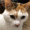 12月21日 河原猫の記録