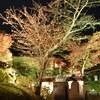 雪舟庭の夜紅葉