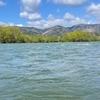 シーズン3日目~悩むなら渇水よりは高水位がいいっ!2021年九頭竜川サクラマス