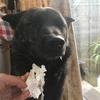 甲斐犬サンのイタズラとヒートの始まり〜||||||||||凹[◎凸◎;]凹||||||||||ガビーン!