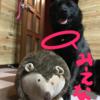 甲斐犬サン、プライドを打ち砕かれるの巻〜ゴルァ(๑•ૅㅁ•๑)!