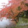 山県の「よさ」を見つけましょう会 11月例会 「伊自良湖周辺の紅葉と散策」