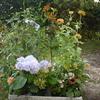 秋の花を買いに