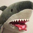 ジャニ、時々、サメ