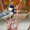 野鳥餌台に来店してくれる鳥の種類|可愛いお客様を紹介します