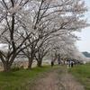 サクラ満開!「ひさやま猪野桜祭り」×好日山荘 コラボウォーキングへ行ってきました。(福岡県)