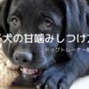 子犬の甘噛み|しつけ方法をドッグトレーナーが教えます