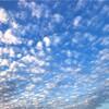 晴れ渡る空に 白い雲