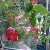 花たちに会うため