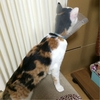 猫の初入院→退院