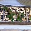 🌵多肉植物  秋の植え替え作業㊵🌵