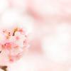 春の足音を楽しみに #8