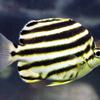 【すごい!生体】海の生き物ベスト3