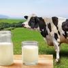 埼玉の日高市の加藤牧場で美味しい乳製品を食べる。