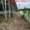 この除草剤は嬉しい!草が伸びる時期でもこのパワーは草刈り機要らずかもしれない件