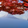 富士山麓で紅葉撮影!!これで今年の紅葉も見納めです (^^;) 河口湖&精進湖編