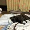 甲斐犬サンの「明日は大阪南三国愛犬クラブ展♣️」の巻〜必殺技練習中〜٩( ᐛ )و❗️