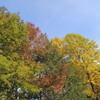 紅葉とキノコ