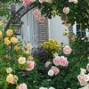 【 秘密の薔薇の園 】 クライマックス!