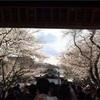 通院後、ぼっちで靖国神社を散歩。その後はフラワーレッスンとイタリアン