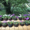 小石川植物園 12