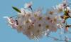 LX100で撮影した春の風景(RAW)をAEで現像してみた