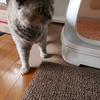 猫トイレの下に敷くやつ