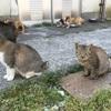 【猫島で有名な青島へ】滞在10分…欠航と定員に注意!松山からの行き方と感想