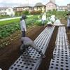 <農業講座日記> 大根間引きとカブ、ホウレンソウのうね作り(9月24日)